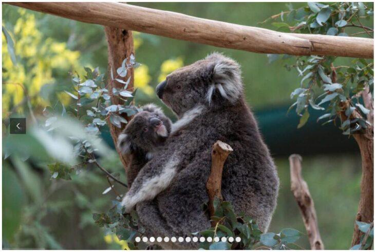 AUSTRALIA - INDIVIDUAL ADVENTURE TRIP 3