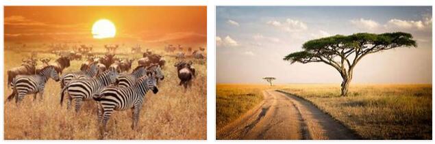 Serengeti National Park 2
