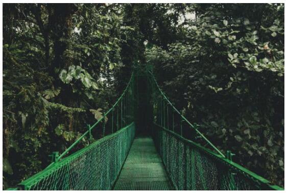Through the fog of Monteverde